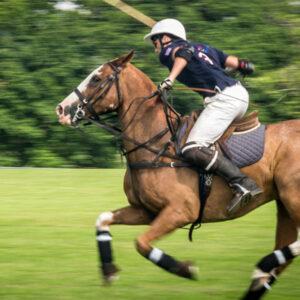 Dorset Polo Club pony in action
