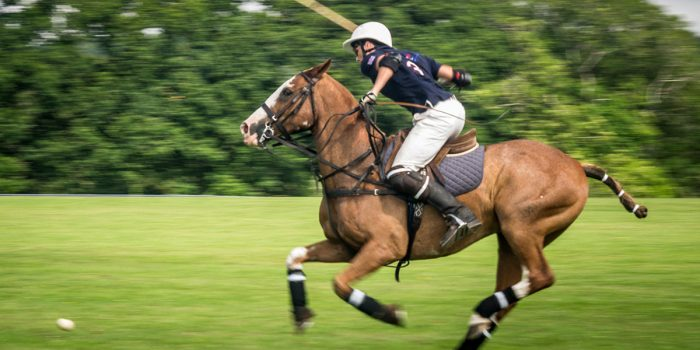 Dorset Polo Club pony in action